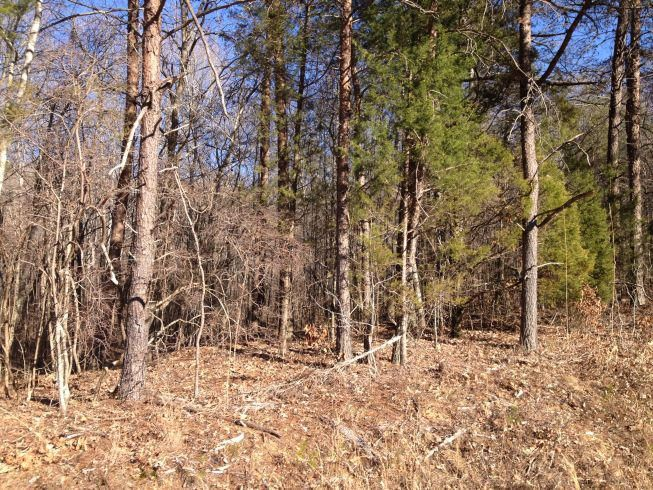 Land for Sale at 330 Branham Hollow Road 330 Branham Hollow Road Ten Mile, Tennessee 37880 United States