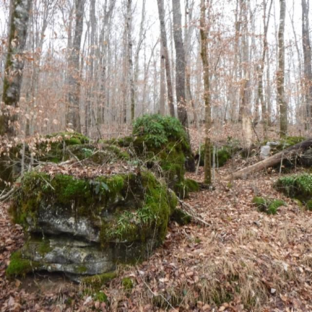 Additional photo for property listing at 90.34 Ac. Alex Stephens Road 90.34 Ac. Alex Stephens Road Jamestown, Tennessee 38556 United States