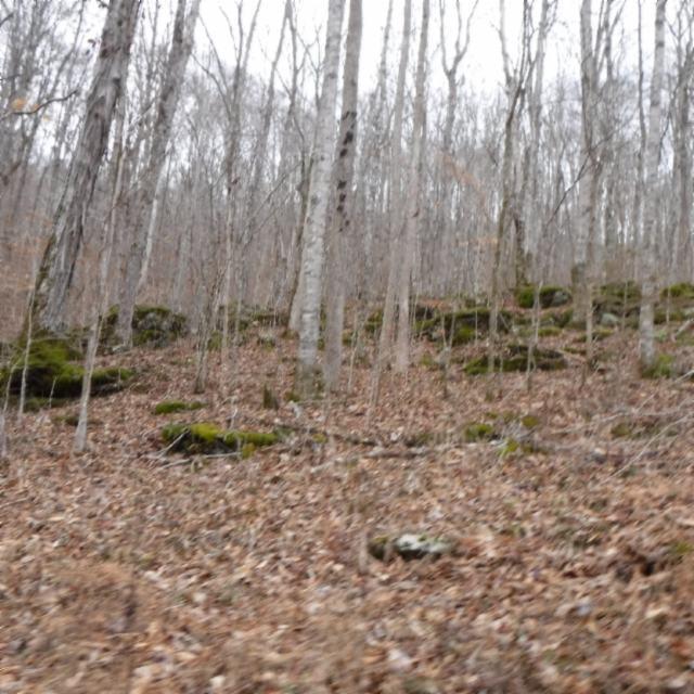 Additional photo for property listing at 90.34 Ac. Alex Stephens Road  Jamestown, Теннесси 38556 Соединенные Штаты