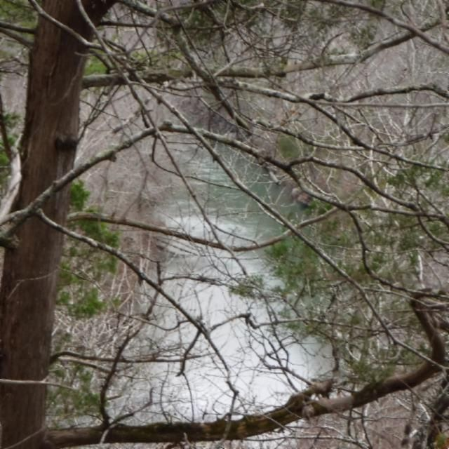 Additional photo for property listing at 90.34 Ac. Alex Stephens Road  Jamestown, Tennessee 38556 États-Unis