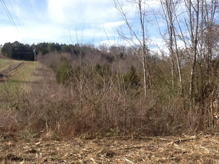Land for Sale at Dogwalk Road Greeneville, Tennessee 37745 United States