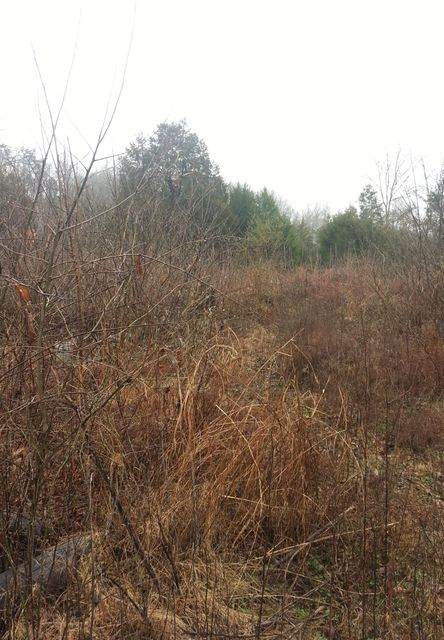 Land for Sale at 4174 S Mohawk Road Road Mosheim, Tennessee 37818 United States