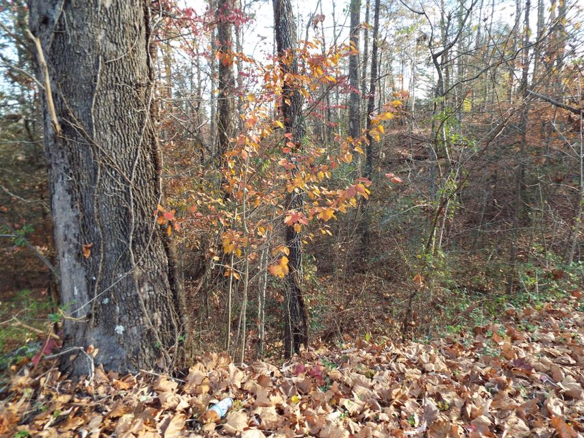 Additional photo for property listing at Wilderness Trail Wilderness Trail Cosby, Tennessee 37722 États-Unis