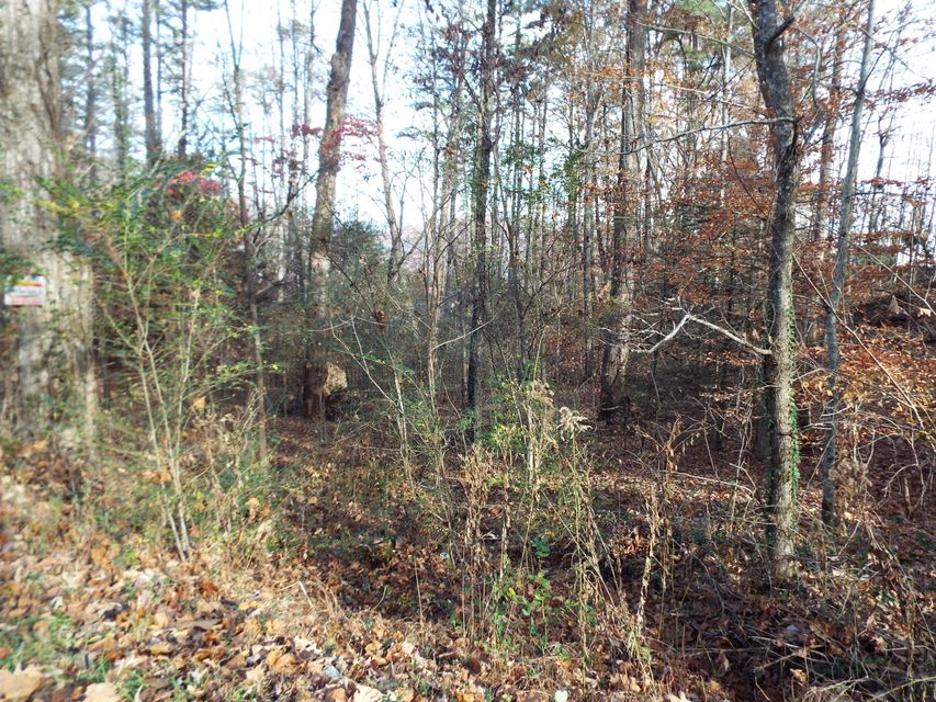 Additional photo for property listing at Wilderness Trail  Cosby, Tennessee 37722 États-Unis