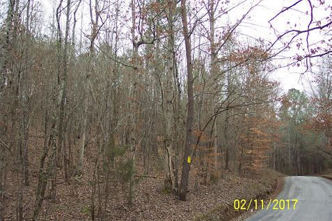 Land for Sale at 80.495 Acres Redman Lane Decatur, Tennessee 37322 United States