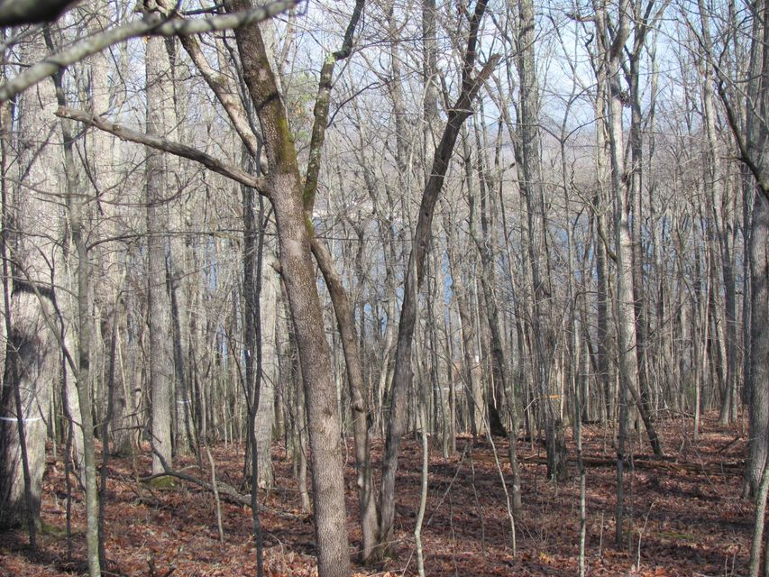Land for Sale at 43 Harley Circle 43 Harley Circle Fairfield Glade, Tennessee 38558 United States