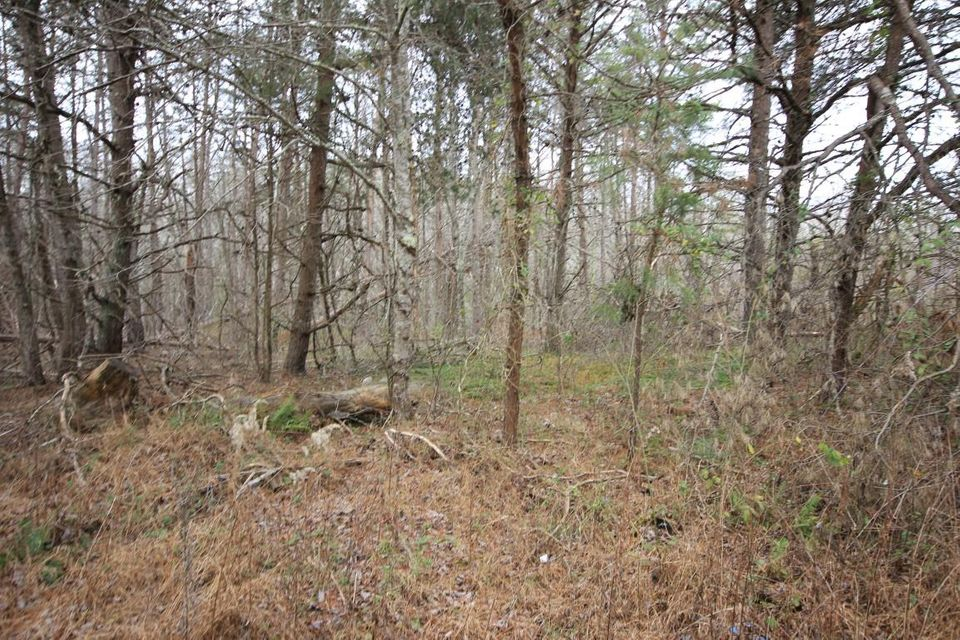 Land for Sale at 196 Acres Twin Bridge Road Deer Lodge, Tennessee 37726 United States