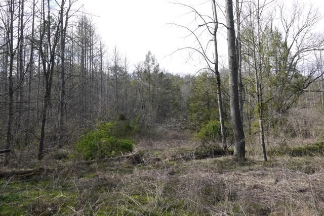 Land for Sale at Par 019.00 Ball Hollow Road Par 019.00 Ball Hollow Road Cosby, Tennessee 37722 United States