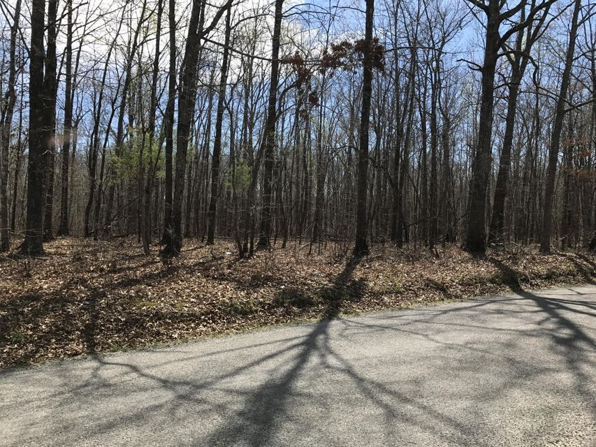 Land for Sale at 1400+ Coon Hollow Road Sunbright, Tennessee 37872 United States