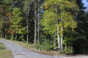Terrain pour l Vente à 2601 English Cove Road Whitwell, Tennessee 37397 États-Unis