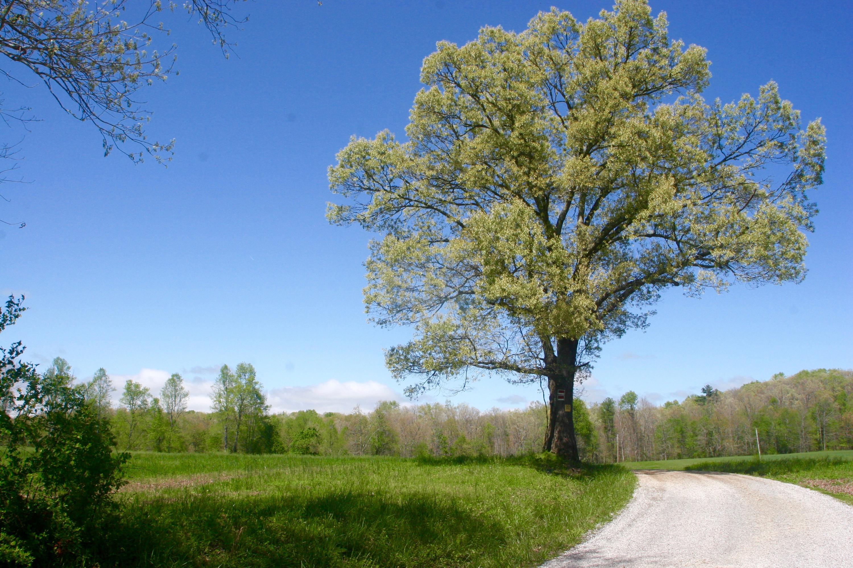 Land for Sale at Honey Creek Loop Road Allardt, Tennessee 38504 United States