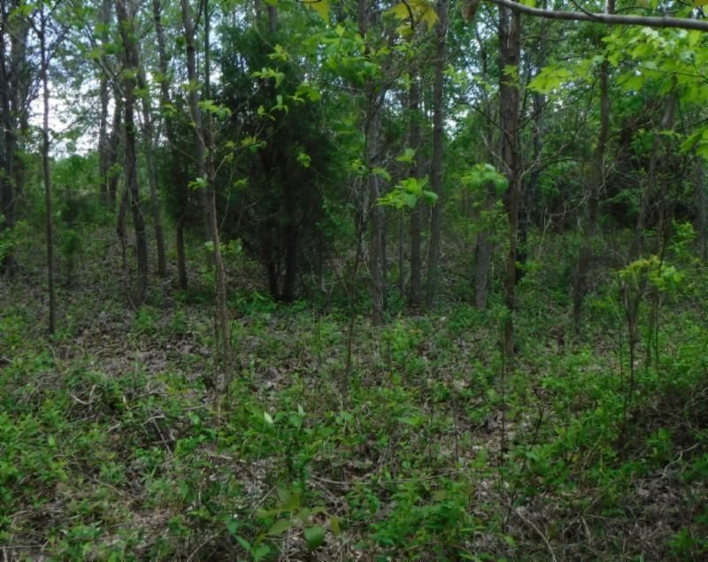 Land for Sale at .57 Ac. Hidden Cove Lane Allons, Tennessee 38541 United States