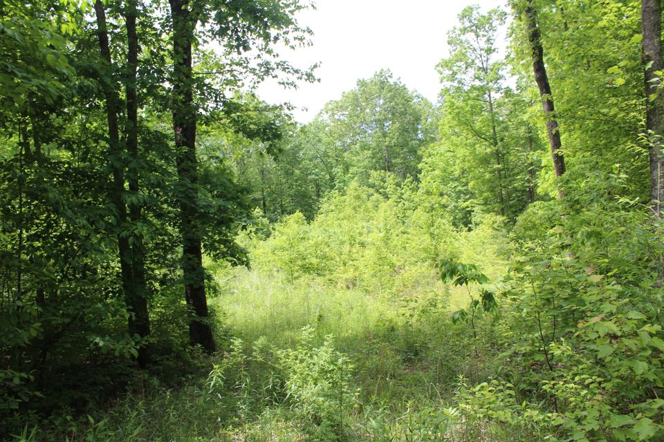 Additional photo for property listing at 1.99 Acres James George Road  Jamestown, Tennessee 38556 United States
