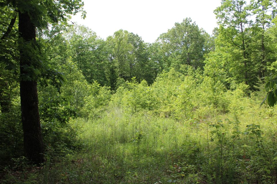 Land for Sale at 1.99 Acres James George Road Jamestown, Tennessee 38556 United States