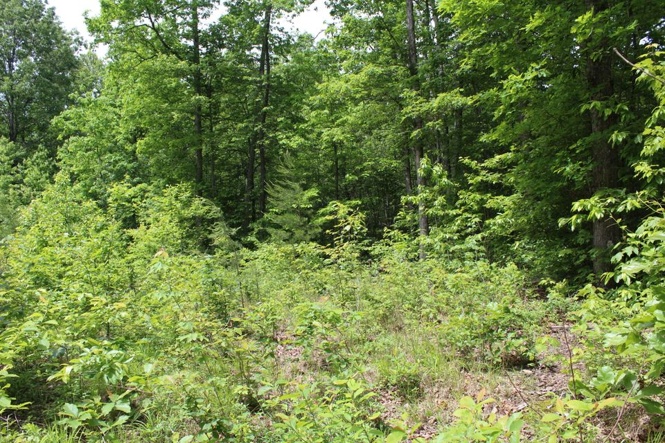 Additional photo for property listing at 1.99 Acres James George Road 1.99 Acres James George Road Jamestown, Теннесси 38556 Соединенные Штаты