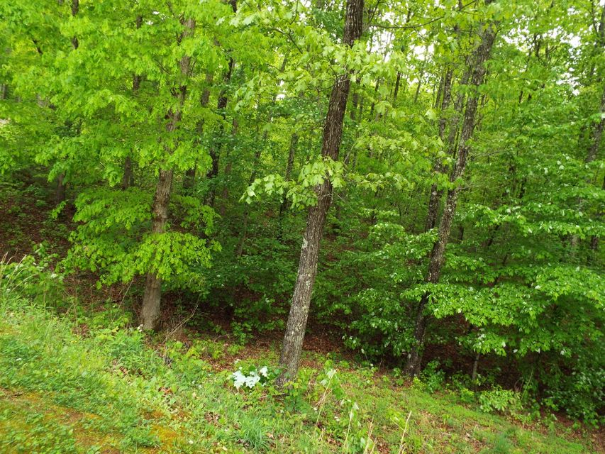Additional photo for property listing at Chinkapin Tr Chinkapin Tr Monterey, Tennessee 38574 Estados Unidos