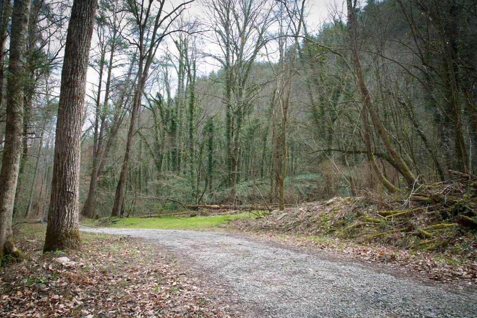 Additional photo for property listing at Bethel Church Road Bethel Church Road Townsend, Tennessee 37882 United States