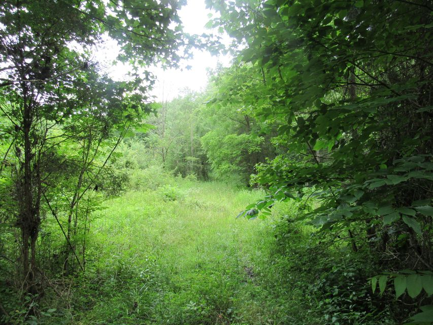Additional photo for property listing at Russell Hollow Road Russell Hollow Road Harriman, 田纳西州 37748 美国