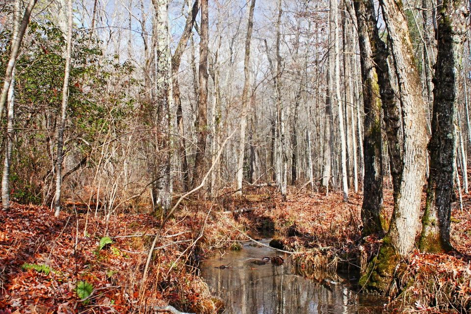 Additional photo for property listing at 25.16 Ac Scott Wyatt Road 25.16 Ac Scott Wyatt Road Deer Lodge, Tennessee 37726 United States