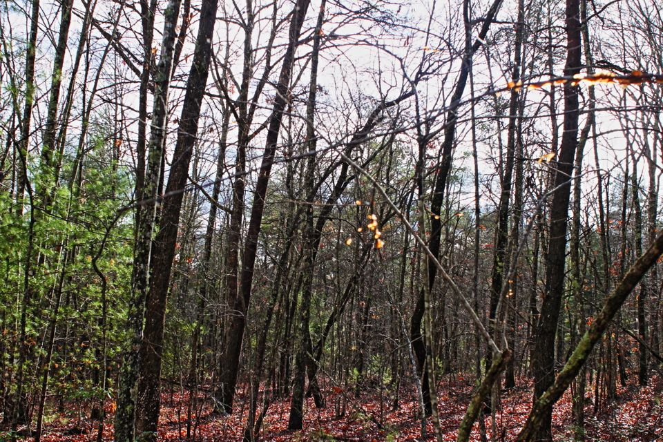 Additional photo for property listing at 25.16 Ac Scott Wyatt Road 25.16 Ac Scott Wyatt Road Deer Lodge, Tennessee 37726 Estados Unidos