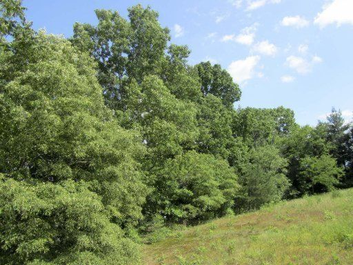 Additional photo for property listing at Lot 2 Harrison Ferry Road Lot 2 Harrison Ferry Road Baneberry, Tennessee 37890 États-Unis