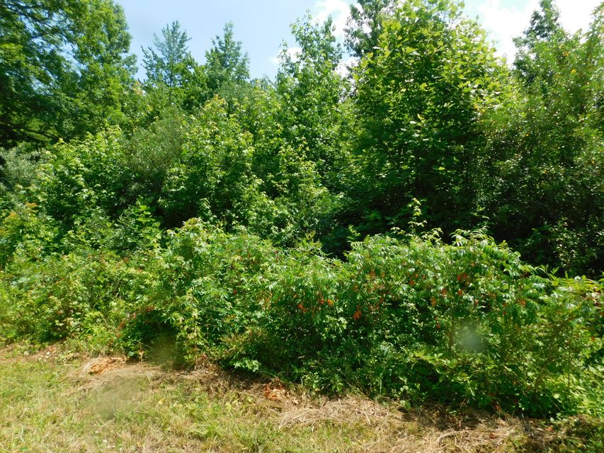 Land for Sale at Highway 52 - Albert Voiles Lane Robbins, Tennessee 37852 United States