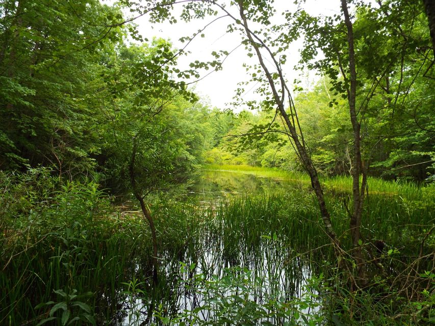 Land for Sale at Bill Roberts Road Bill Roberts Road Sunbright, Tennessee 37872 United States