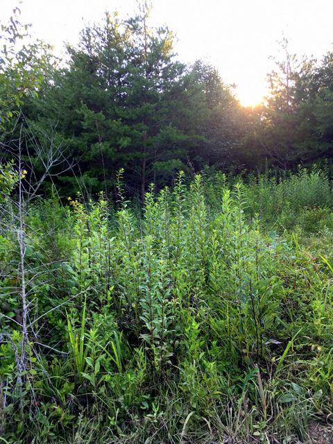 Additional photo for property listing at Reagan Valley Road Reagan Valley Road Tellico Plains, Tennessee 37385 Estados Unidos