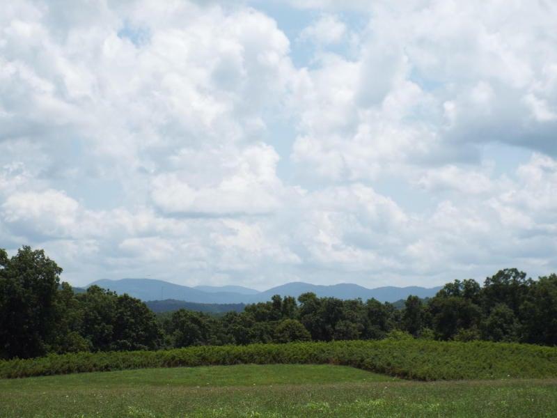 土地 为 销售 在 635 Pilot Mountain Road Sunbright, 田纳西州 37872 美国
