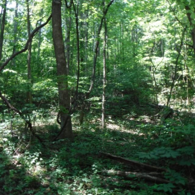 Land for Sale at 175 Walker Lane Livingston, Tennessee 38570 United States