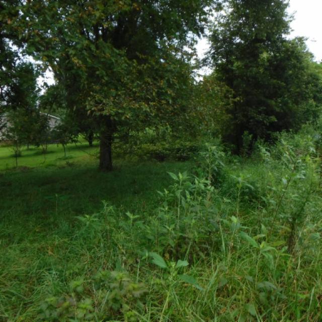 土地,用地 为 销售 在 165 Bowman Branch Lane 165 Bowman Branch Lane Pleasant Shade, 田纳西州 37145 美国