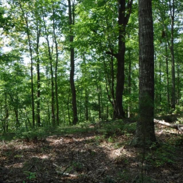 Land for Sale at Heart Ridge Road Heart Ridge Road Hilham, Tennessee 38568 United States