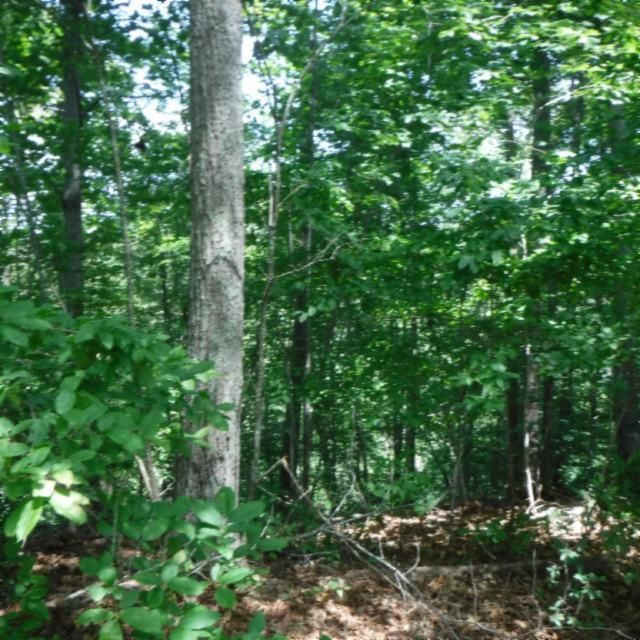 Additional photo for property listing at Heart Ridge Road Heart Ridge Road Hilham, Tennessee 38568 États-Unis