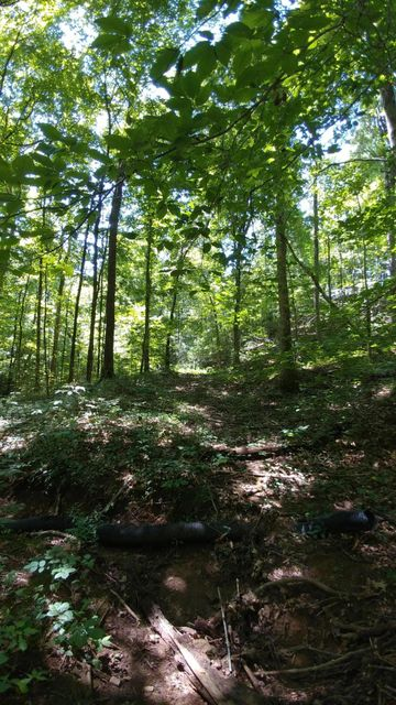 Additional photo for property listing at Tract 6 Old Highway 72 Tract 6 Old Highway 72 Vonore, Теннесси 37885 Соединенные Штаты