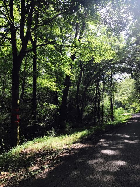 Terreno por un Venta en 17.15 Acre County Road 87 17.15 Acre County Road 87 Athens, Tennessee 37303 Estados Unidos