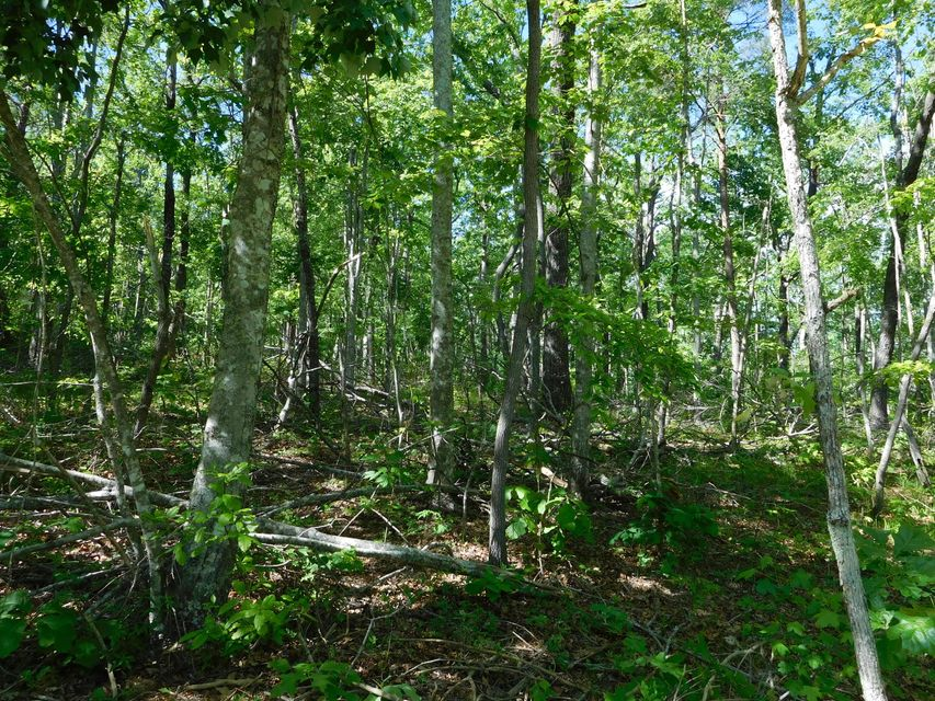 Additional photo for property listing at Sawmill Road Sawmill Road Monterey, Tennessee 38574 Estados Unidos