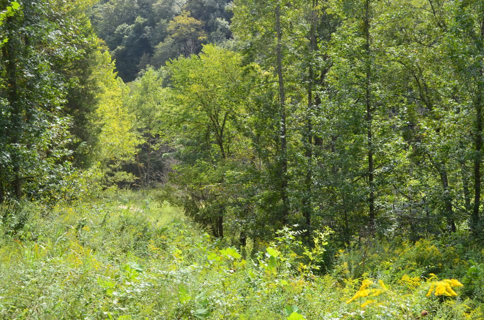 Additional photo for property listing at 40 Ac Swann Creek/Hen Johnson 40 Ac Swann Creek/Hen Johnson Sneedville, Tennessee 37869 United States
