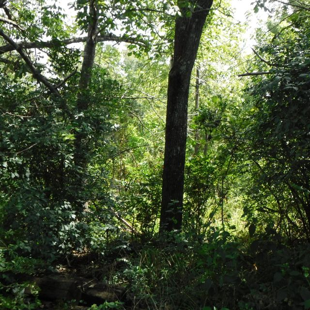 Additional photo for property listing at 751, 753 Pomona Road 751, 753 Pomona Road Crossville, Tennessee 38571 Estados Unidos