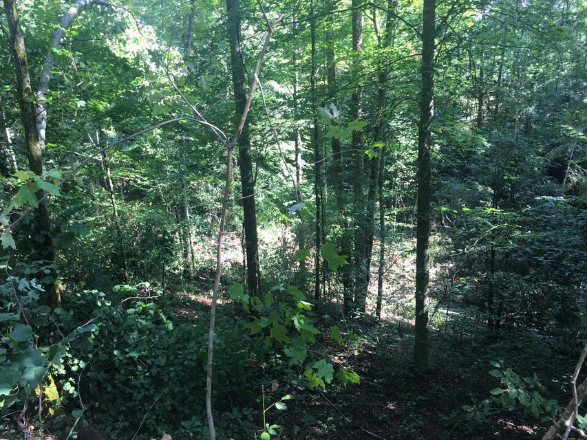 Additional photo for property listing at Maiden Lane Maiden Lane Speedwell, Tennessee 37870 Estados Unidos