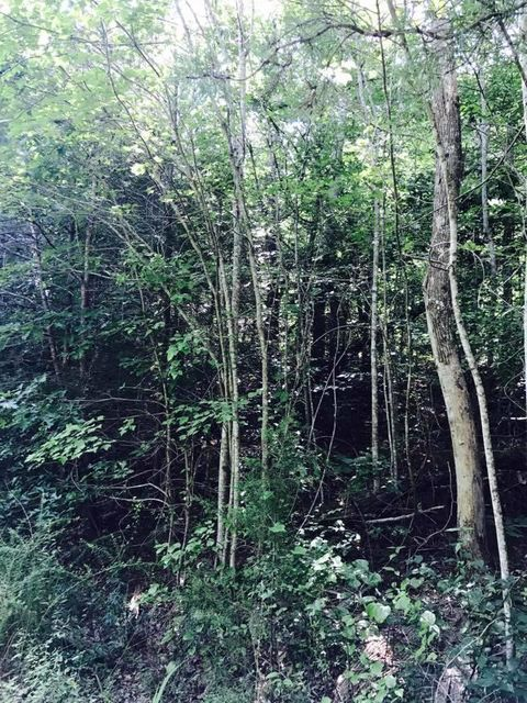 Additional photo for property listing at 17.15 Acre County Road 87 17.15 Acre County Road 87 Athens, Tennessee 37303 Estados Unidos