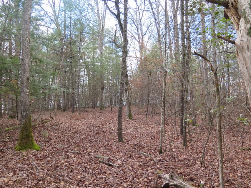 Additional photo for property listing at Mountain View Drive Mountain View Drive Deer Lodge, Tennessee 37726 États-Unis
