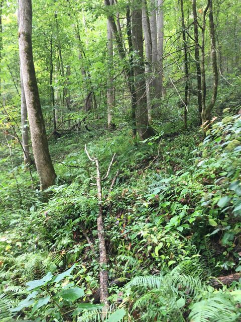 Additional photo for property listing at Briar Branch Road Road Briar Branch Road Road Walland, Tennessee 37886 United States