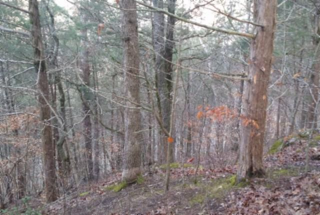 Additional photo for property listing at Rue Des Rindler Rue Des Rindler Alpine, Tennessee 38543 États-Unis