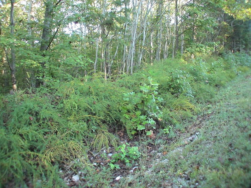 Additional photo for property listing at Lot 228 Crystal Springs Road Lot 228 Crystal Springs Road 洛克伍德, 田纳西州 37854 美国