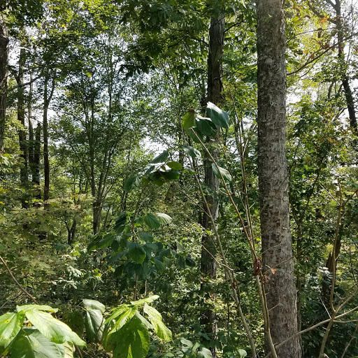 Land for Sale at 2506 Riverton Road 2506 Riverton Road Jamestown, Tennessee 38556 United States