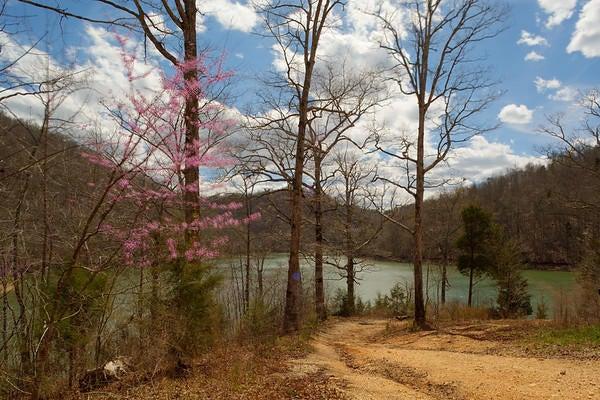 土地,用地 为 销售 在 Lakeway Lane Lakeway Lane New Tazewell, 田纳西州 37825 美国