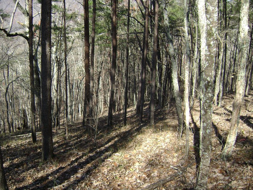 Additional photo for property listing at Back Valley Road Back Valley Road Dayton, Tennessee 37321 États-Unis