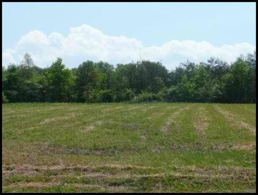 Land for Sale at Lot #32 County Road 545 Lot #32 County Road 545 Englewood, Tennessee 37329 United States