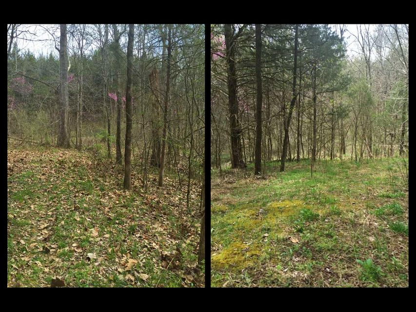 Additional photo for property listing at Palmer Hollow Road Palmer Hollow Road Bybee, Tennessee 37713 États-Unis