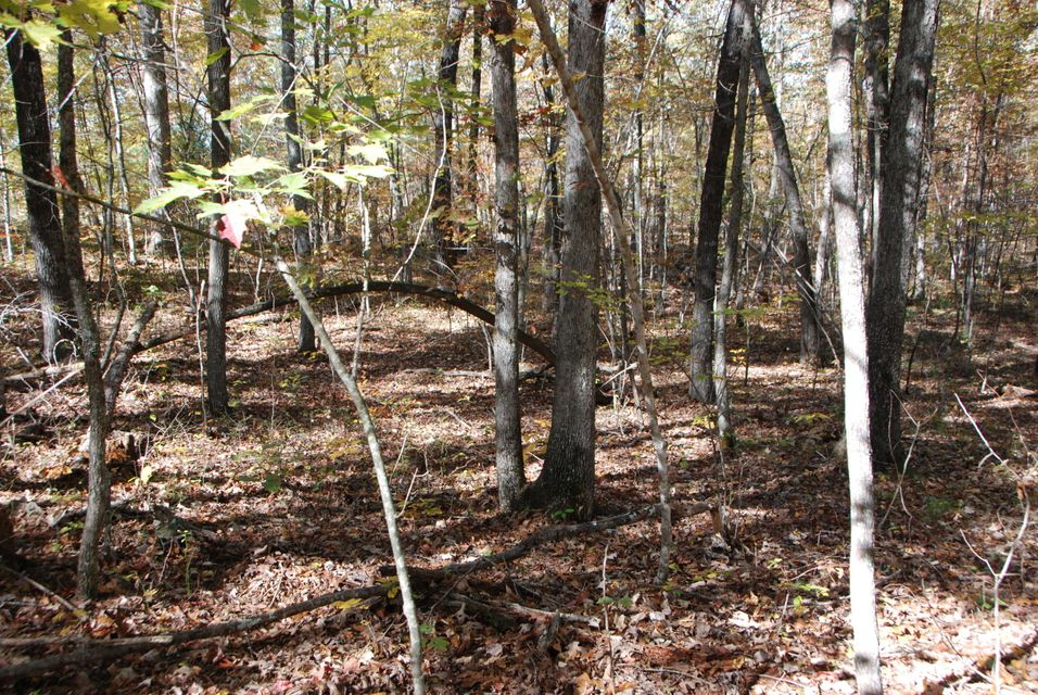 Additional photo for property listing at Wildcat Rd. & Cougar Lane Wildcat Rd. & Cougar Lane Jamestown, Tennessee 38556 Estados Unidos